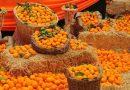 seferihisar mandalina festivali turu